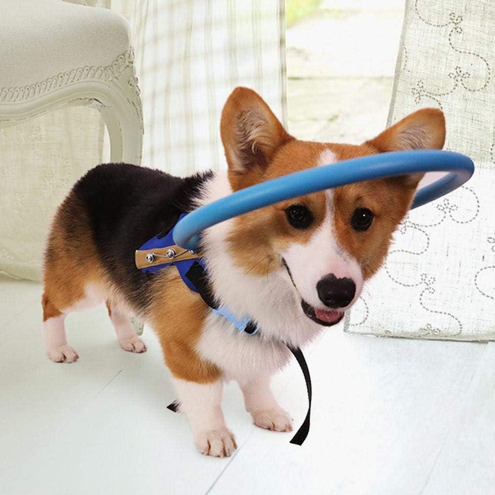 XS Anillo Seguro para Perros Ciegos Dispositivo de gu/ía de arn/és para Perros Ciegos Seguro Ligero y Ajustable para Gatos Mascotas Perros con Ojos Enfermos