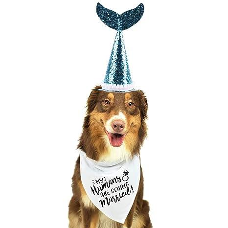 Amazon.com: Bandana para perro y gorro de lentejuelas ...