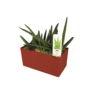 DuneCraft PW-0110 Indespensible Aloe: Toys & Games