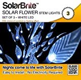 Solar Brite Solar Powered Led Branch Lights Eco Friendly Go green Save up to 100% on Energy Costs Set of 3