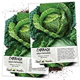 Seed Needs, Savoy Perfection Cabbage (Brassica oleracea) Twin Pack of 300 Seeds Each Non-GMO