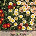 "1,000 Flower Seeds, Daisy ""English Mixture"" (Bellis perennis) Seeds By Seed Needs"