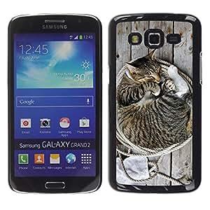 Be Good Phone Accessory // Dura Cáscara cubierta Protectora Caso Carcasa Funda de Protección para Samsung Galaxy Grand 2 SM-G7102 SM-G7105 // Kitten House Cat American Bobtail