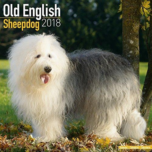 Old English Sheepdog Calendar 2018 - Dog Breed Calendar - Premium Wall Calendar 2017-2018