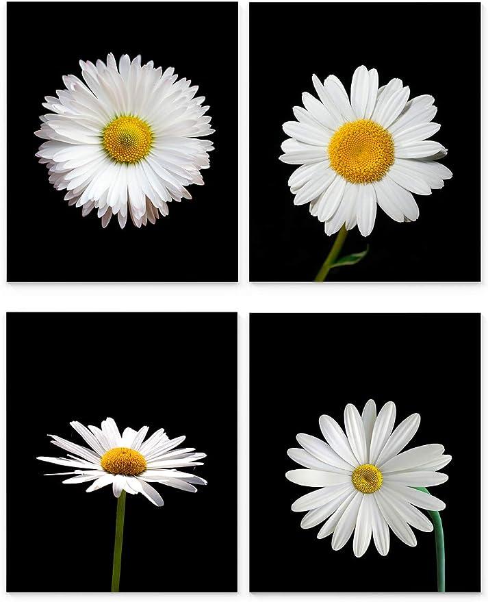 Set of 3-5X7 8X10 11X14 Daisies Botanical Prints Pressed Flower Art Daisy Print Set