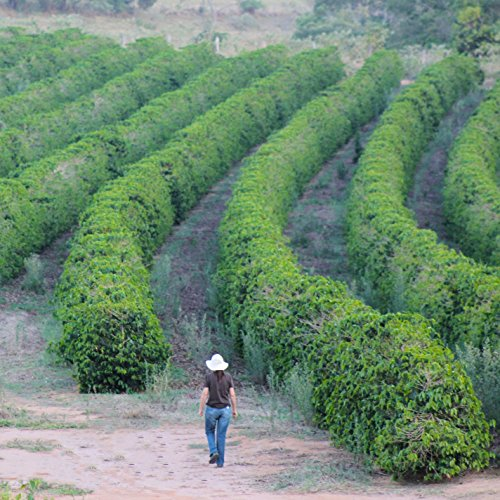 2lb Green Unroasted Coffee Brazil Catucai Red - From our family farm by Unleashed Coffee (Image #5)