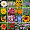 David's Garden Seeds Wildflower All Perennial Seed Mix OS112CE (Multi) 500 Open Pollinated Seeds