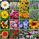 David's Garden Seeds Flower All Perennial Seed Mix SL1127 (Multi) 500 Open Pollinated Seeds