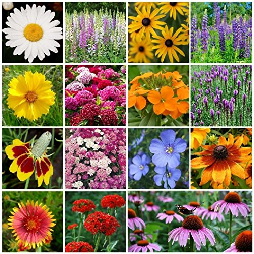 Butterfly Wildflower Seed Mix (David's Garden Seeds Wildflower All Perennial Seed Mix SL112CE (Multi) 500 Open Pollinated Seeds)