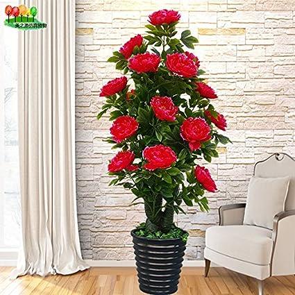 Amazon.com: The fake tree Pachira living room decorative ...