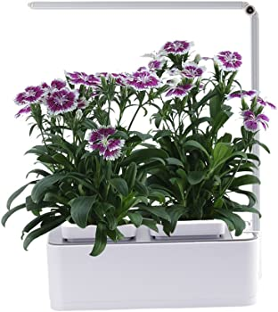 AIBIS Hydroponics Watering Growing System