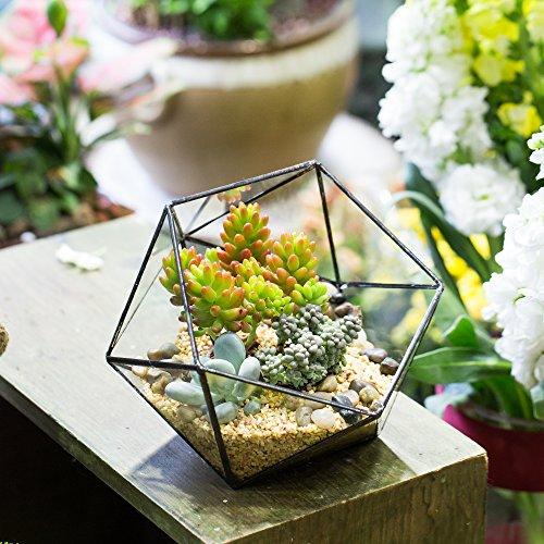 NCYP Geometric Glass Terrarium Half Ball Pentagon Planter Indoor Balcony Window Sill Succulent Plant Cacti Fern Flower Pot Container Tabletop Bowl Shape Vase Miniature Centerpiece (No Plants Included)
