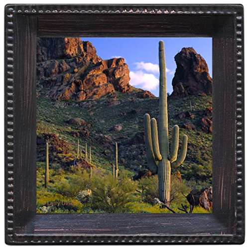 Thirstystone Ambiance Coaster Set, Saguaro View, Multicolored