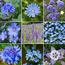 David's Garden Seeds Wildflower Singing The Blues Mix OS111 (Blue) 500 Open Pollinated Seeds