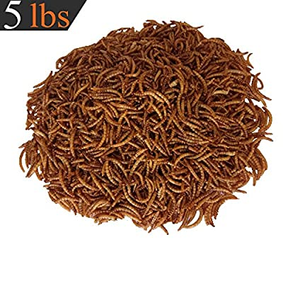 Dried Mealworms Bulk Chickens Wild Birds Bluebirds Baby Ducks Poultry Turtles Cichlid Fish