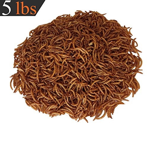 Dried Mealworms Bulk Chickens Wild Birds Bluebirds Baby Ducks Poultry Turtles Cichlid Fish 6172BZViCaL