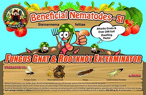 Million Live Beneficial Nematodes Exterminator product image