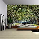 wall26 Long Pathway in an Arch Tree Covered Forest - Wall Mural, Removable Sticker, Home Decor - 100x144 inches
