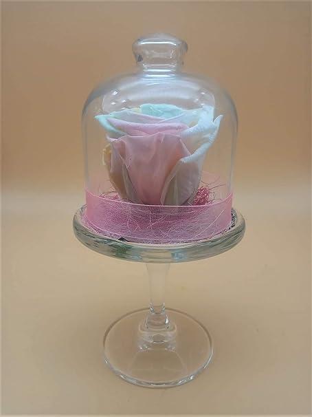 Rosa eterna Arco Iris Pastel. Gratis TU ENVÍO. Rosa preservada Arco Iris Pastel XL en Porta Tarta de Cristal. Altura 22 cm. Hecho en España.: Amazon.es: Hogar