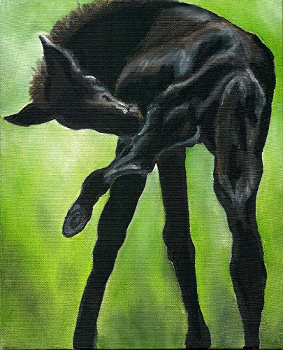 Black Foal Horse Signed Art Print of Original (Original Signed Painting)