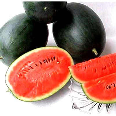 Black Diamond Watermelon! 15 Seeds! : Garden & Outdoor