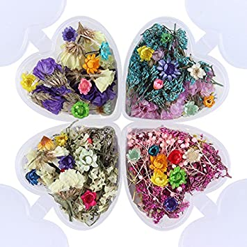 Amazon.com: NICOLE DIARY 4 Cajas Coloridas Mezcla de Flores ...
