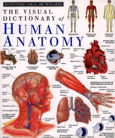 Amazon Human Anatomy Dk Visual Dictionaries 9780789404459