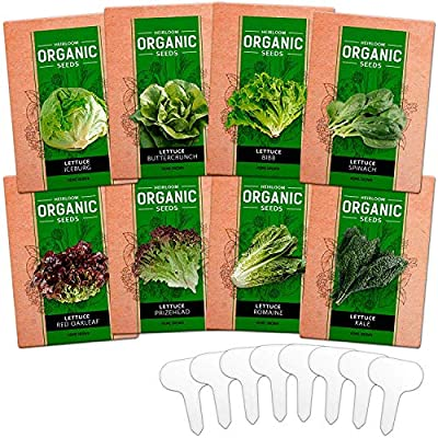 8 Heirloom Lettuce and Leafy Greens Seeds - Over 1000 Seeds - Non GMO Bulk Lettuce Seeds for Planting - Kale, Spinach, Butter, Oak, Romaine, Iceberg, Bibb - Prepper Supplies, Hydroponic, Home Garden