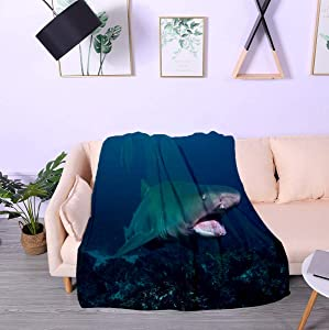 BEISICC Soft Throw Blanket Soft Ligtweight Durable Cozy Bed Couch Blanket Plush Microfiber Grey Nurse Shark Tweed Heads New South Wales Australia Warm Blankets,60x90 inch