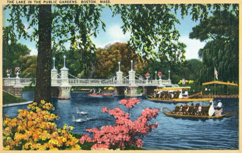 Boston, Massachusetts - View of Swan Boats in the Public Gardens Lake (12x18 Collectible Art Print, Wall Decor Travel (Boston Swan Boats)
