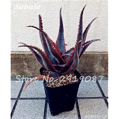 New! 20 Pcs Colorful Cactus Rebutia Variety Mix Exotic Aloe Seed Cacti Rare Cactus Office Edible Beauty Succulent Bonsai Plant 18 : Garden & Outdoor