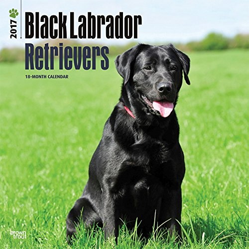 Black Labrador Retrievers 2017 Wall Calendar