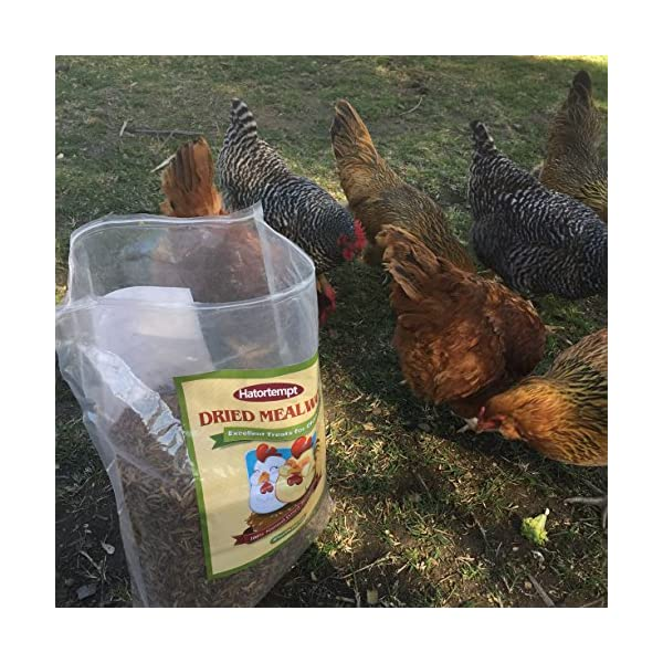 11lbs Bulk Non-GMO Dried Mealworms for Reptile, Tortoise ; Amphibian,Lizard ;Wild Birds; Chichens; Duck etc 6