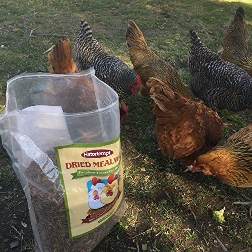 Hatortempt 5 lbs dried mealworms for wild bird chicken for Mealworms for fishing