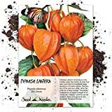 Seed Needs, Chinese Lantern (Physalis alkekengi) 200 Seeds