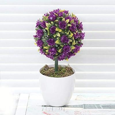 HOTUEEN 50pcs Rare Globosa Sabina Chinensis Seeds Bonsai Tree Plant Home Office Trees : Garden & Outdoor