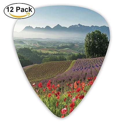 Amazoncom Poppy Flower Lavender Farm Foggy Morning Agriculture