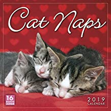 2019 Cat Naps 16-Month Wall Calendar: by Sellers Publishing, 12x12 (CA-0376)