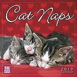 Cat Naps 2019 Wall Calendar