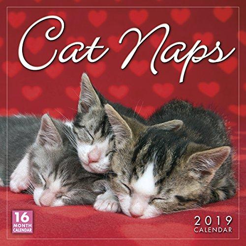 Kittens Wall Calendar - Cat Naps 2019 Wall Calendar