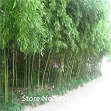 Garden Plant 100pcs/bag KINDS MIXED bamboo seeds,tree seeds potted balcony, planting is simple, budding rate of Bonsai Seed