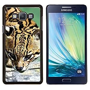 TECHCASE---Cubierta de la caja de protección para la piel dura ** Samsung Galaxy A7 ( A7000 ) ** --Ocelot felino cazador lindo gato grande salvaje
