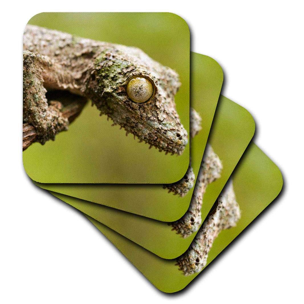 Set of 8 3dRose CST/_207351/_2 Mossy Leaf-Tailed Gecko on a Piece of Bark in Eastern Madagascar Soft Coaster