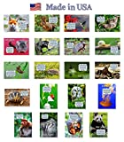ANIMALS FUN FACTS postcard set of 20 postcards. Animal and bird post cards variety pack. Made in USA.