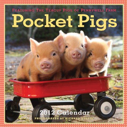 Pocket Pigs 2012 Calendar: The Teacup Pigs of Pennywell