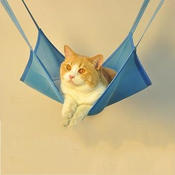 Zheng Hui Shop Hamacas Hamaca para Gatos Columpio para Colgar Mascota (Color : Blue, Size : 52 * 51cm): Amazon.es: Hogar