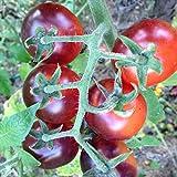 Indigo Blue Berries Tomato, 20 Seeds