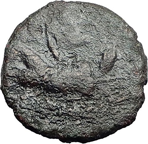 katane-sicily-2-1cenbc-river-god-amenanos-gemini-caps-rare-r1-greek-coin-i59534