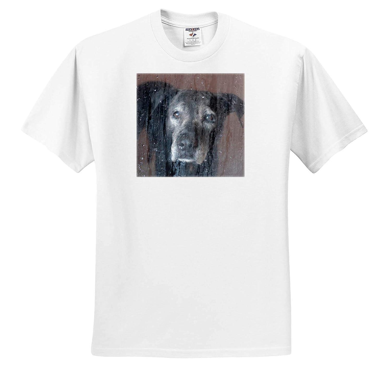 3dRose Susans Zoo Crew Animal T-Shirts sad Old Black lab Dog Canine in Shower