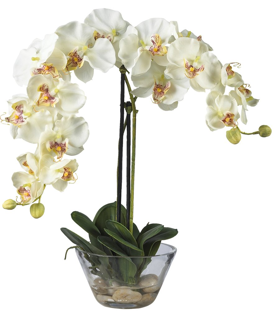 Amazon Nearly Natural 4643 Wh Phalaenopsis With Glass Vase